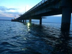 Newport Squid2015 5