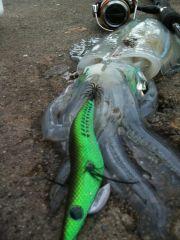 sqquiding 006