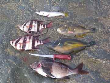 Great Ocean Road Spearfishing - Australian Diving & Spearing